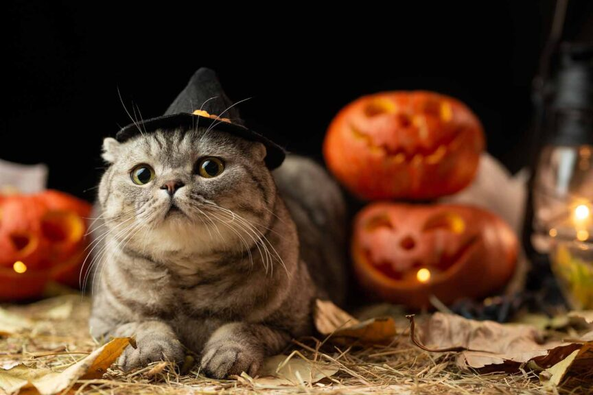 dress your cat for halloween